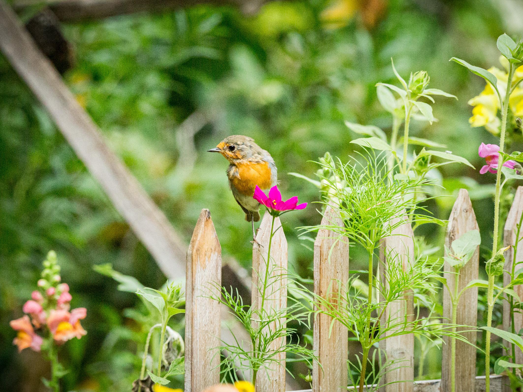 Ein Einblick in unser Gartenatlier