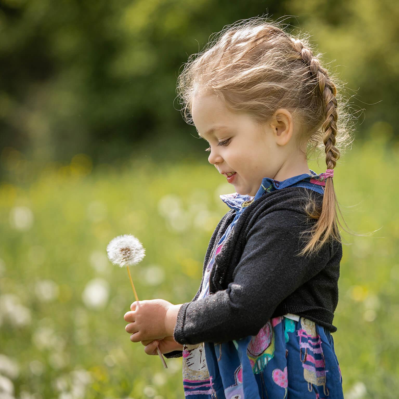 Pusteblume Frühlingshafte Bilder in der Blumenwiese